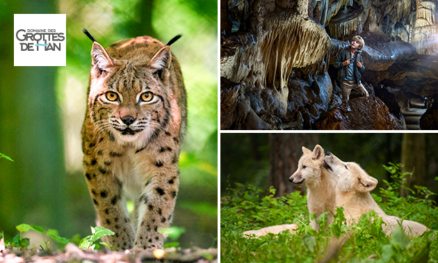 Entree tot Grotten van Han, Wildpark en meer
