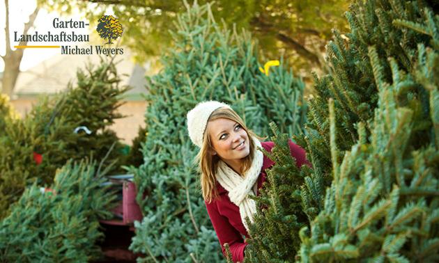 Zum Abholen oder selber schlagen: Weihnachtsbaum