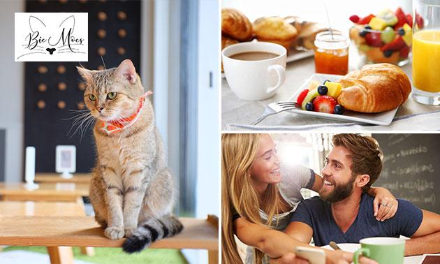 Ontbijt bij Kattencafé Bie Moes in hartje Sittard