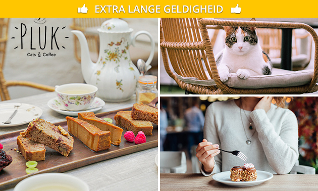 Drankje + gebak bij Pluk Cats & Coffee