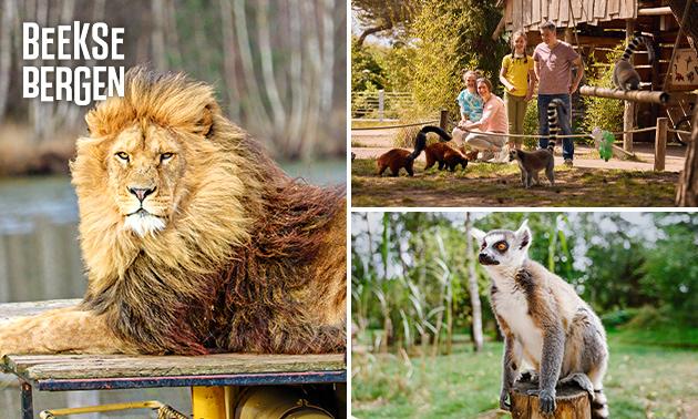 Eintritt Safaripark Beekse Bergen + opt. warmes Getränk