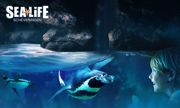 Eintritt SEA LIFE Scheveningen